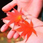 【箕面滝】箕面公園でのんびり秋の紅葉散策