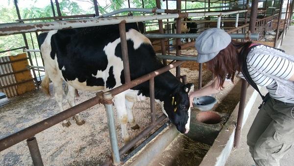黒沢牧場はおいしい牛乳と牛さんに出会えるレジャーランド【和歌山】