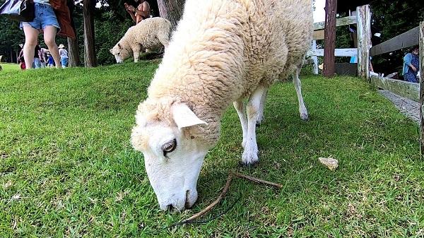 六甲山牧場・イベントを徹底的に楽しめるプラン紹介
